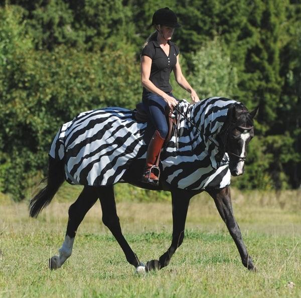 Buzz-Off Riding Zebra from Bucas