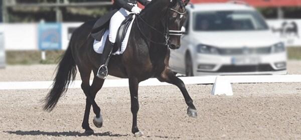 HORKA Horse Mane//Rider Hair Spirals